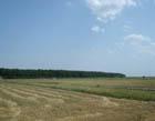 terenuri